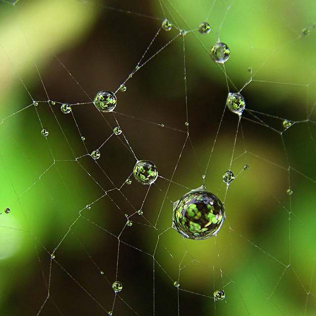 Catching light in a web by Evan Leeson on Flickr