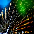 Spiderweb reflecting light by Thomas Leth-Olsen