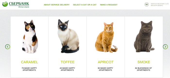Just some of the cats available for a 2-hour visit to qualified borrowers' new homes.