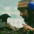 Four lions, one crow
