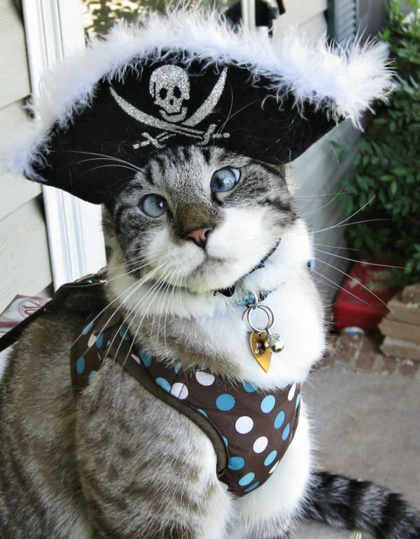 Spangles the Cross Eyed Pirate Kitty
