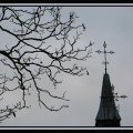 Branching Out by Fr Lawrence Lew, O.P.