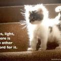 kittens of light!