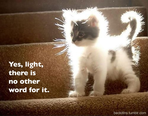 kittens of light!