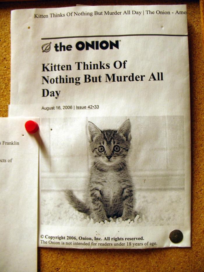 murder kitten