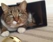 Cat in a box. Metaphor in a poem.
