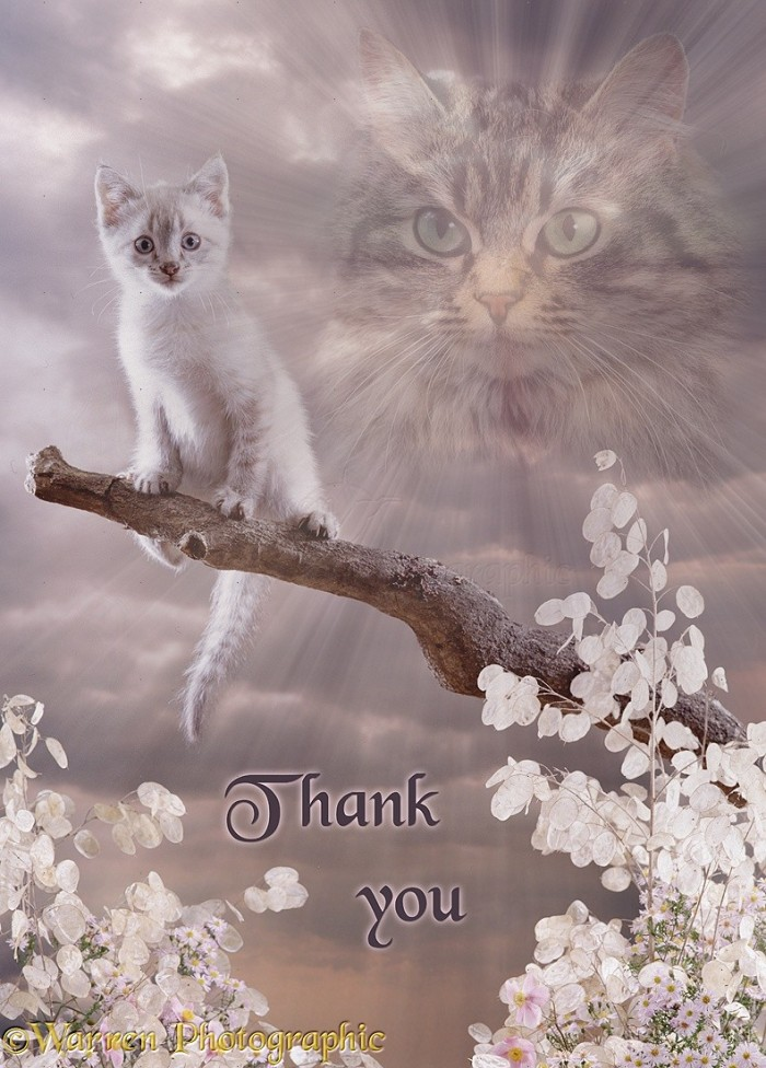 Thank you, kittens!