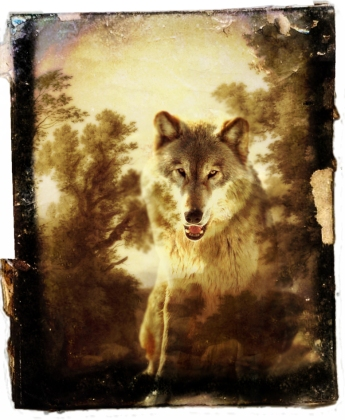 Spirit of the Wolf by Alice Popkorn on Flickr