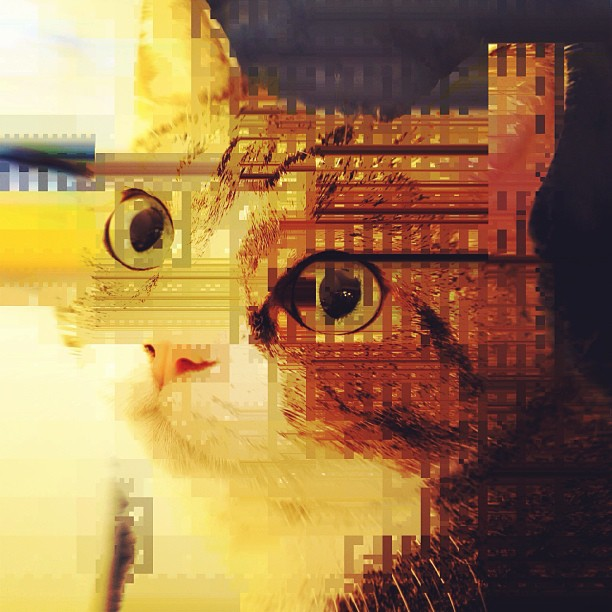 Glitch Cat by Torley on Flickr