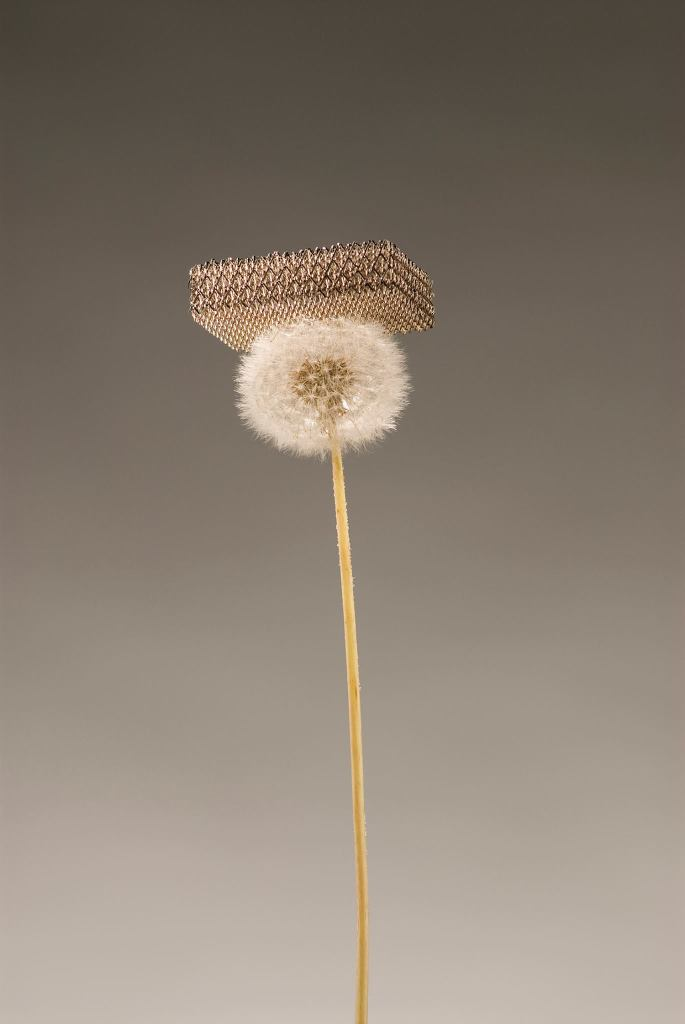 DARPA dandelion shows off ultra light materials created by Dr Julia Greer