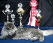 Champ Kitteh via PetClassifieds.us