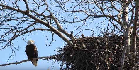 Capture Eagle