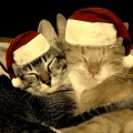 Christmas Cats by tuija2005 on Flickr