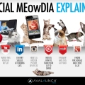 Kittens explain social media, they explain everything.