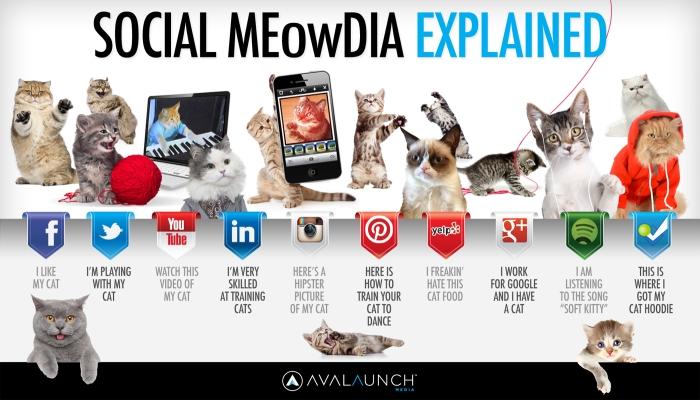 Kittens explain social media, they explain everything.